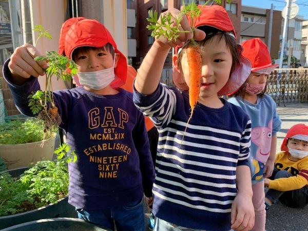 にんじんの収穫(^^)v